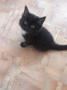 Продам милых котят! Караганда