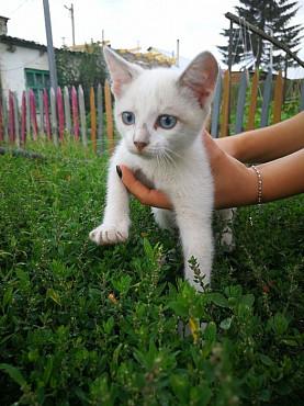 Отдадим котёночка в хорошие руки! Павлодар