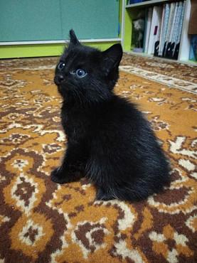 Отдам котёнка Усть-Каменогорск