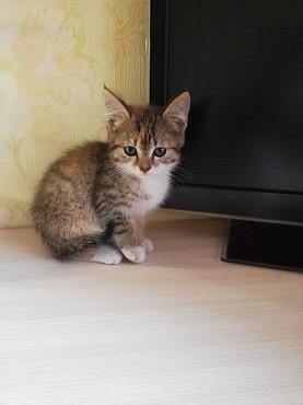 Дарю котят в хорошие руки Караганда