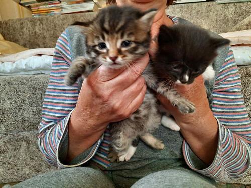 Котята даром Степногорск