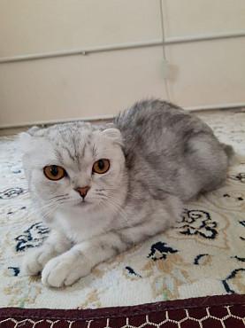 Кошка Актау