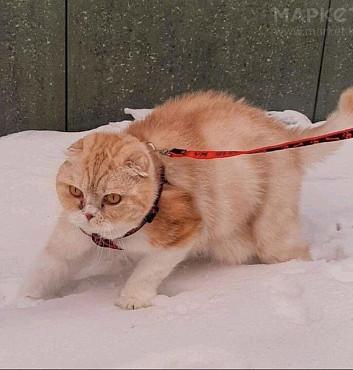 Продам кошку Нур-Султан