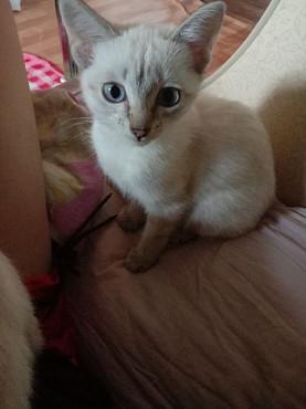 Котенок. Отдам котенка в хорошие руки! Нур-Султан