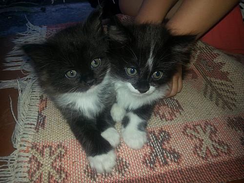 Котята от крысоловки Алматы