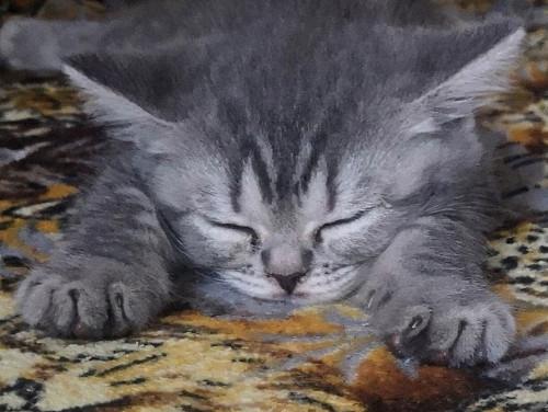 Продам котят, мальчик и девочка, не родные Нур-Султан