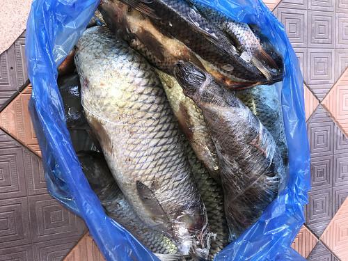 Рыба свежая Алматы