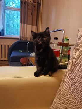 Отдам котенка в добрые руки Алматы