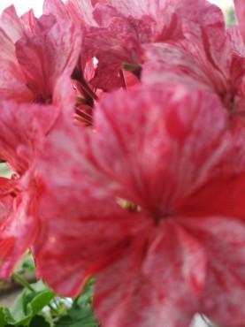 Продам цветы Павлодар