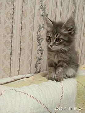 Котята даром Алатау с/з