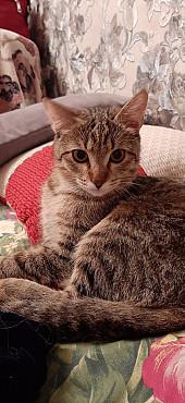 Отдам котенка Алматы