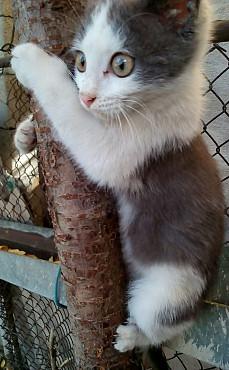 Котёнок Алматы