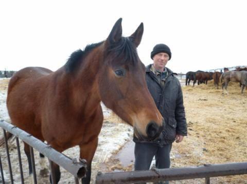 Предлагаю работу на конюшне конюхом Алматы