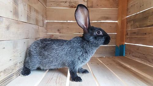 Продам кроликов Алматы
