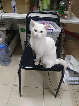 Кошки Нур-Султан