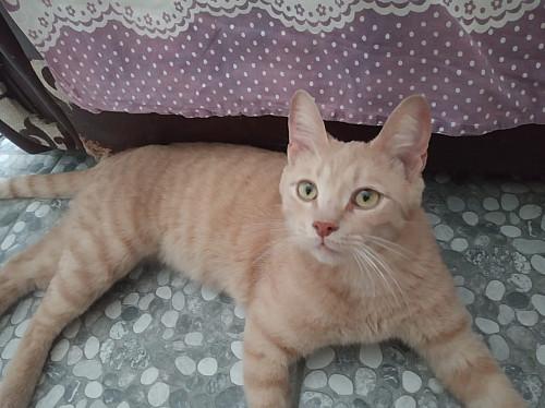 Рыжий кот в добрые руки Алматы