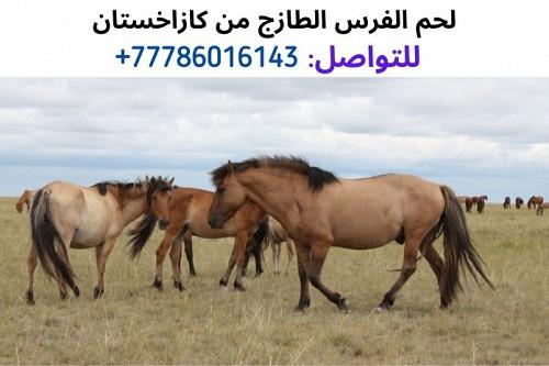 لحم الفرس من كازاخستان، واتساب للتواصل: 0077786016154 Алматы