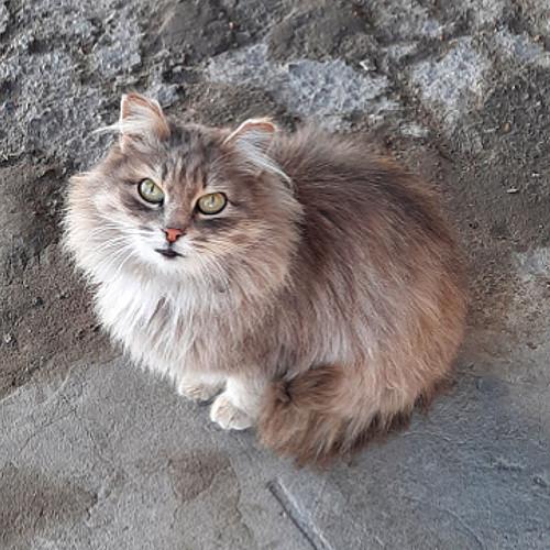 Молодая кошечка Нур-Султан
