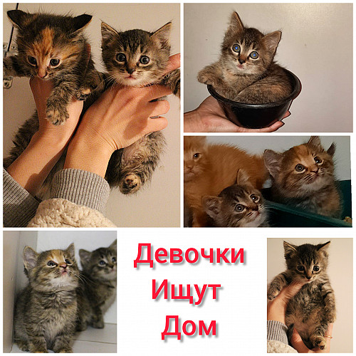 Котята в добрые руки Нур-Султан
