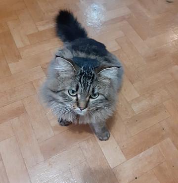 Отдадим котейку в хорошие руки в связи с переездом! Алматы