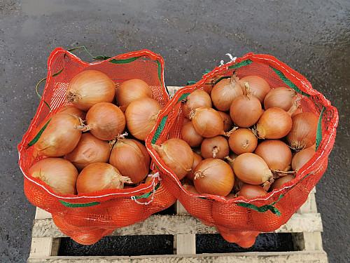 Продам оптом репчатый лук урожай 2020 Капчагай