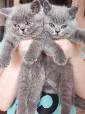 Плюшевые котята Караганда