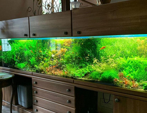 Изготовление аквариумов Алматы