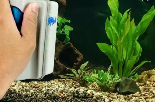 Чистка и уборка аквариумов Алматы