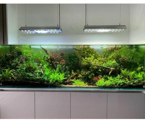 Дизайн аквариума Алматы