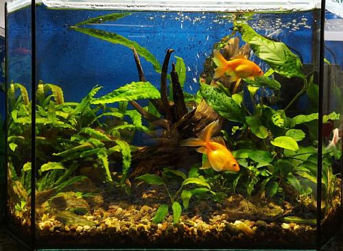Аквариум травник с рыбками Алматы