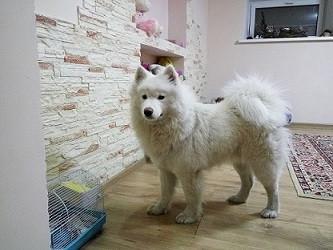 Гостиница для собак Алматы