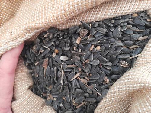 Продам семечки очищенные Урджар тонна в наличий Урджар