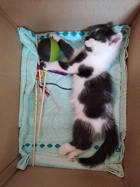 Срочно отдам котёнка в добрые руки! 1000 тг Алматы