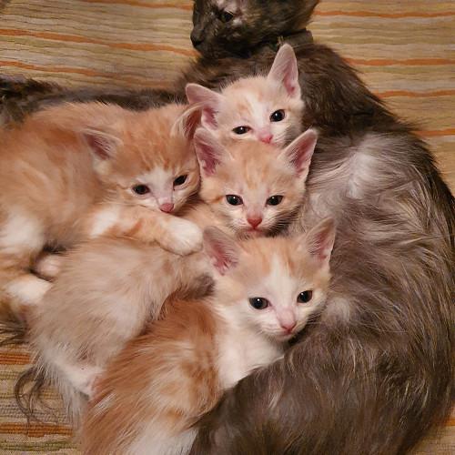котята бесплатно Семей