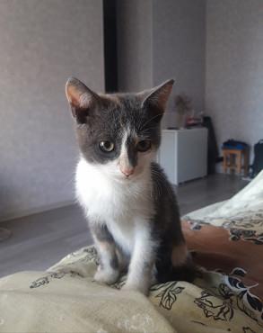 Отдам котенка в хорошие руки ! Нур-Султан