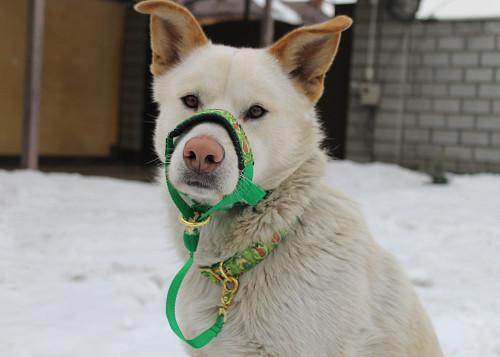 собака даром Талдыкорган