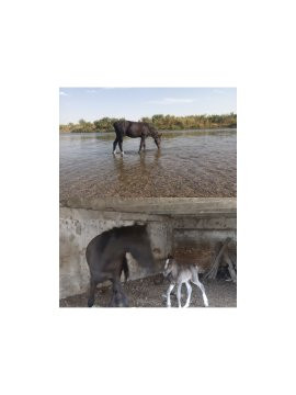 Лошадь с жеребенком Кордай